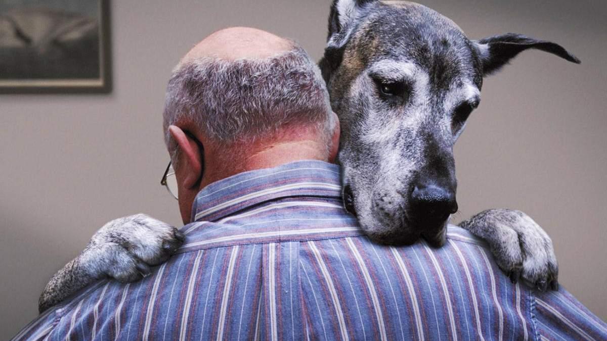 Собаки переживают стресс вместе со своими владельцами