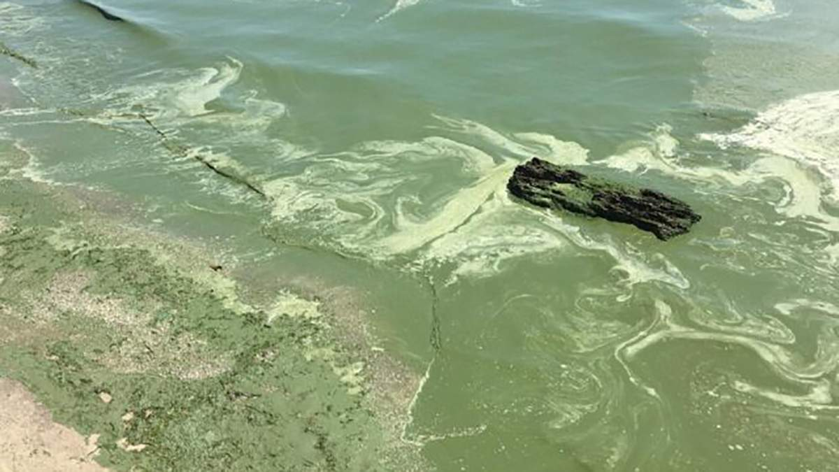 В Одесі позеленіло море