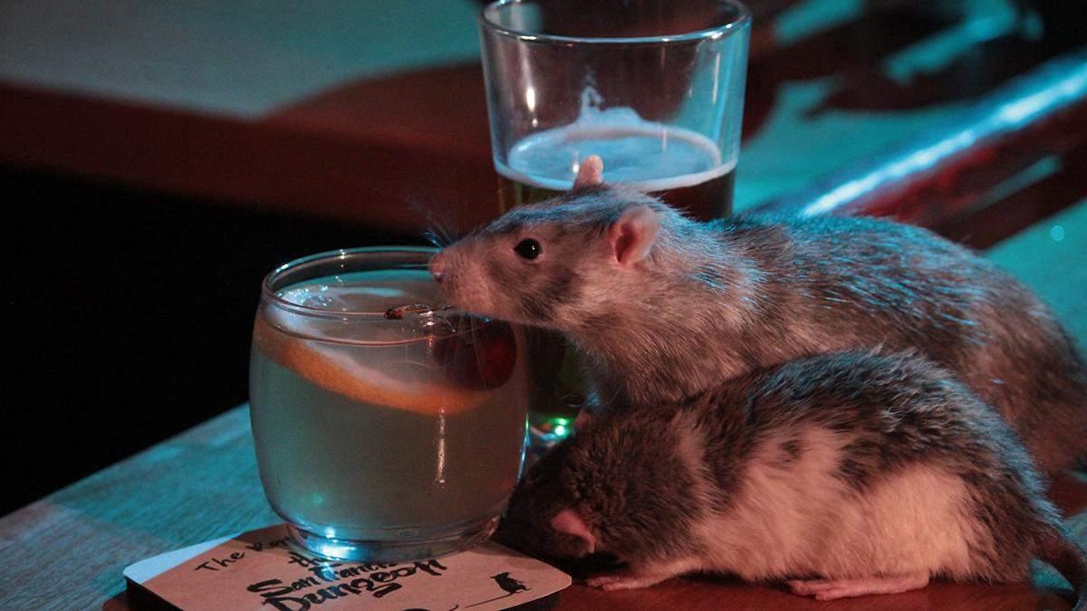 У США відкрили бар зі щурами