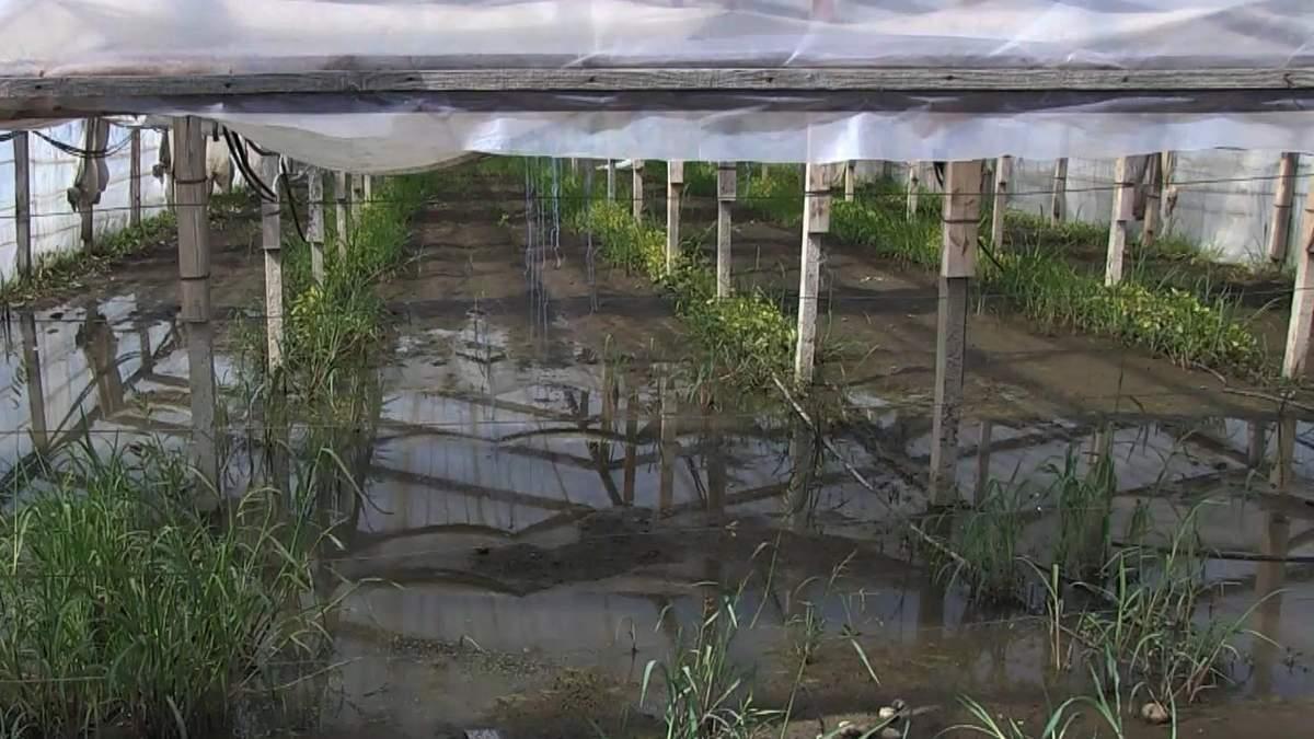 Без урожаю та даху над головою: Херсонщина страждає від наслідків негоди (фото, відео)