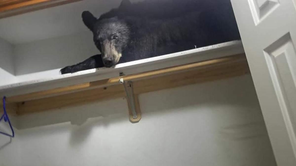Медведь залез в дом и улегся спать в шкафу