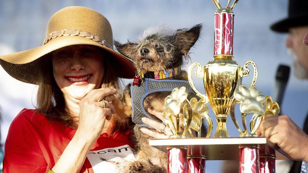 В США выбрали самую уродливую собаку в мире
