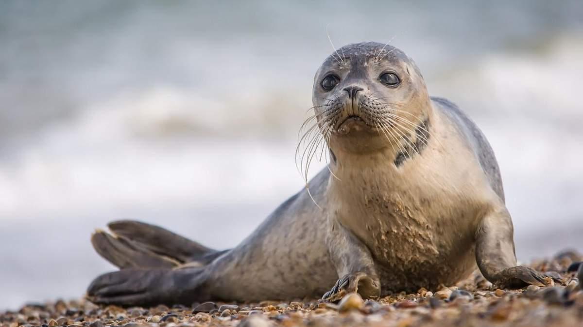 """Як науковці навчили тюленів виконувати пісні з """"Зоряних війн"""": кумедне відео"""