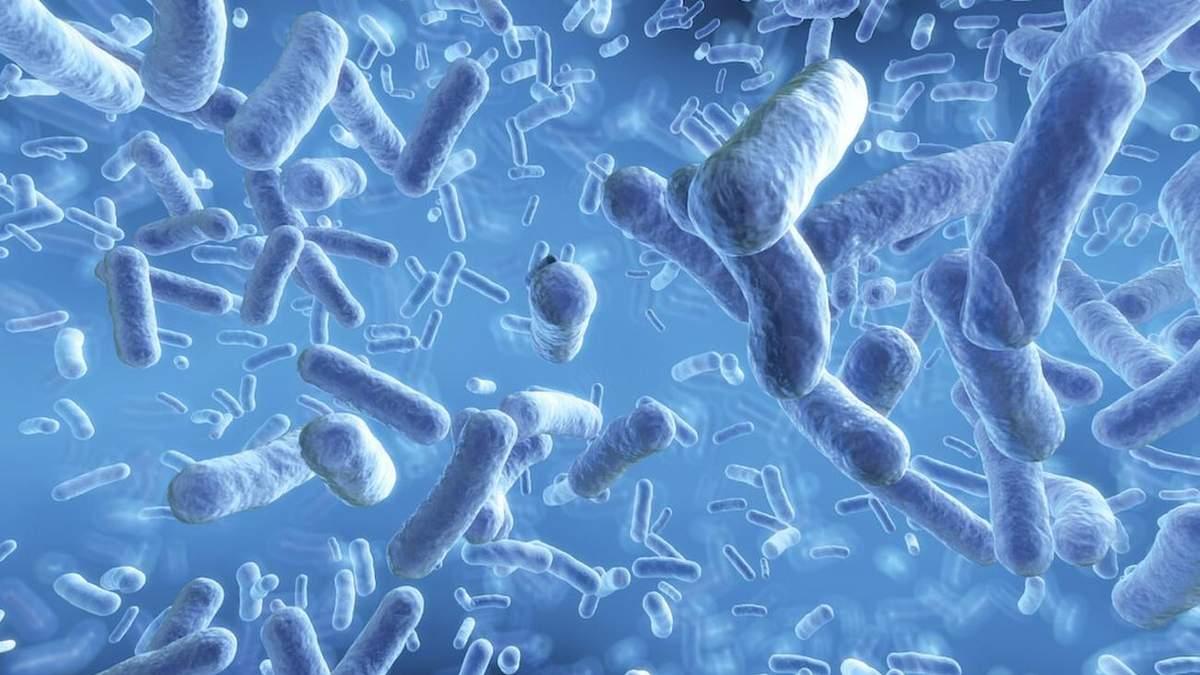 Бактерія (ілюстрація)