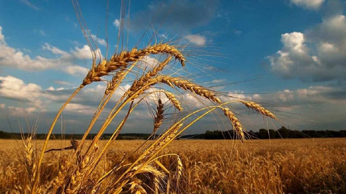 Погода 15 августа 2019 Украина – прогноз погоды синоптика