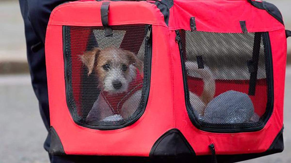 У британского премьера появился щенок: трогательные фото
