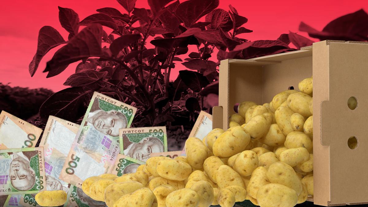 Цена на картошку 2019 – почему украинский картофель дорожает