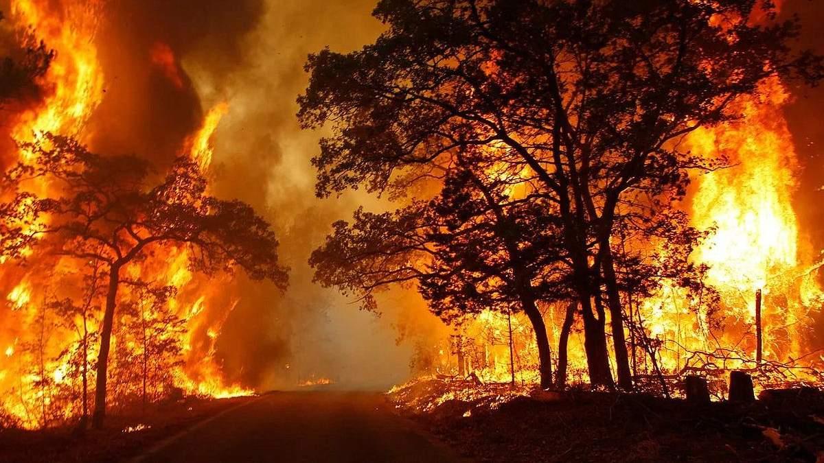Які можуть бути наслідки пожеж у Росії та Бразилії?