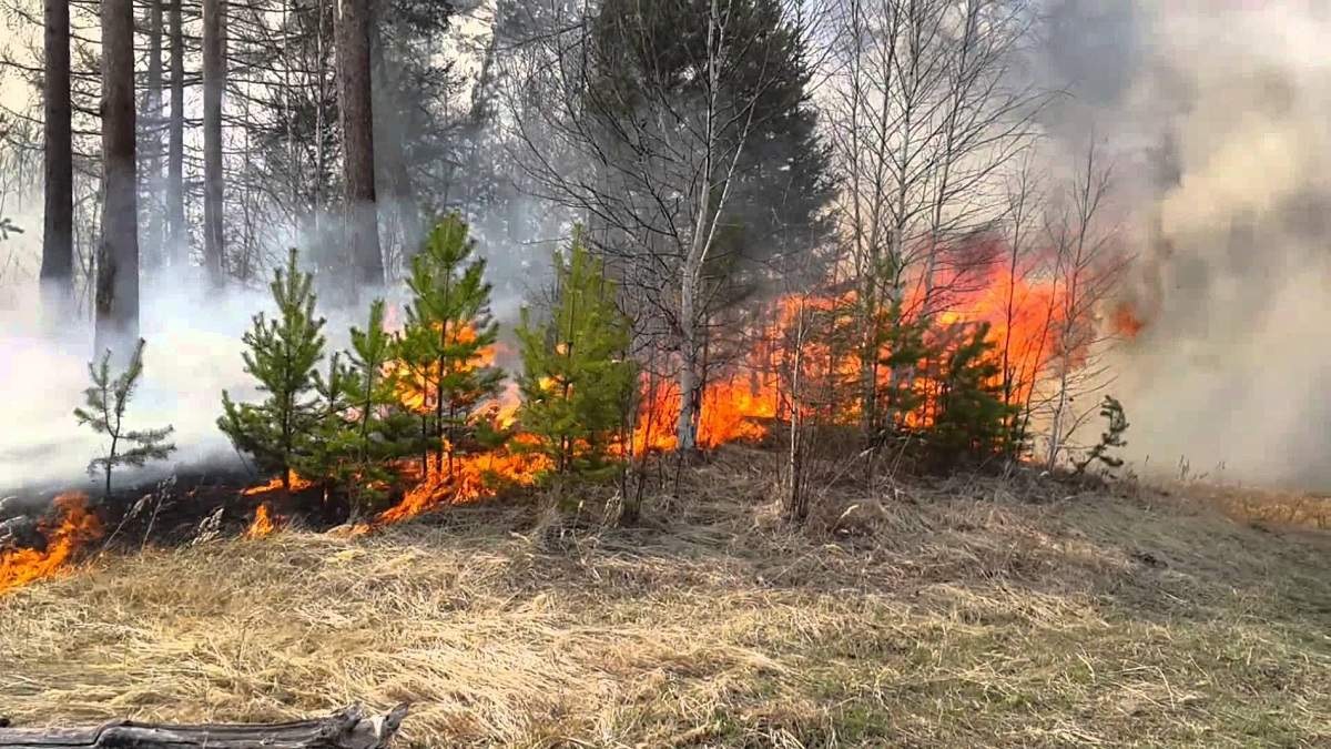 В Черниговской области горит лес на территории военного полигона: фото