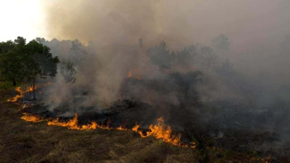 В Індонезії 50 тисяч гектарів охоплено вогнем