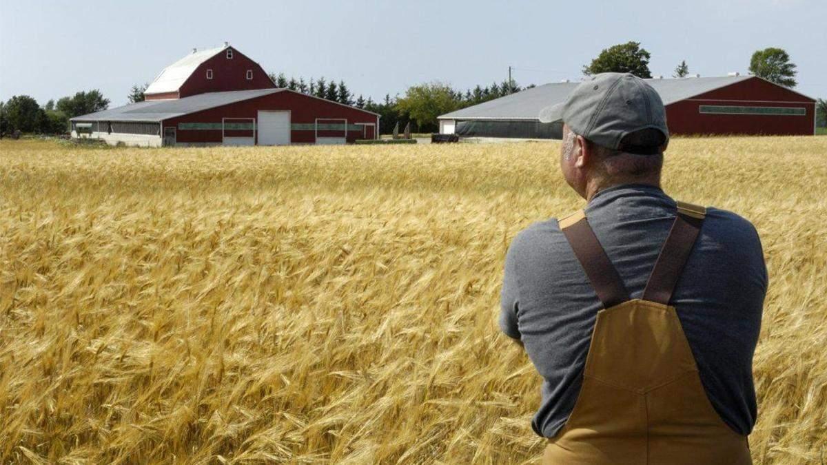 Рынок земли в Украине: как украинская власть будет помогать фермерам