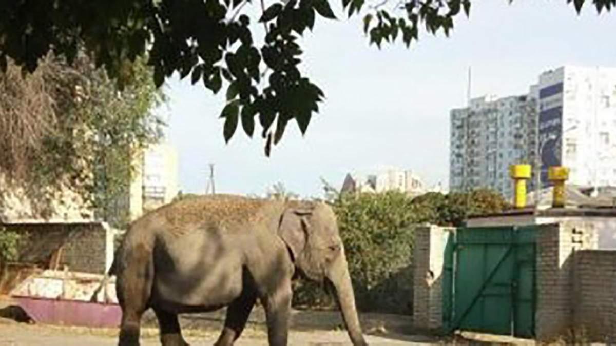У Харкові на вулиці помітили слониху