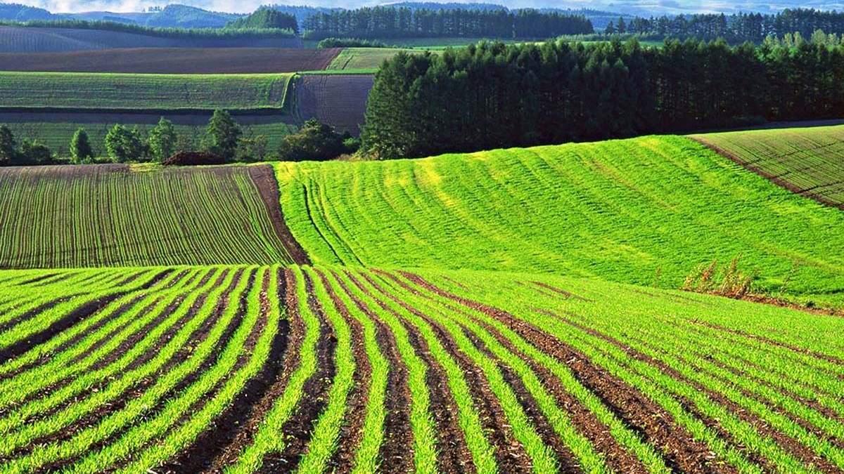 Земельна реформа і деякі історичні алюзії