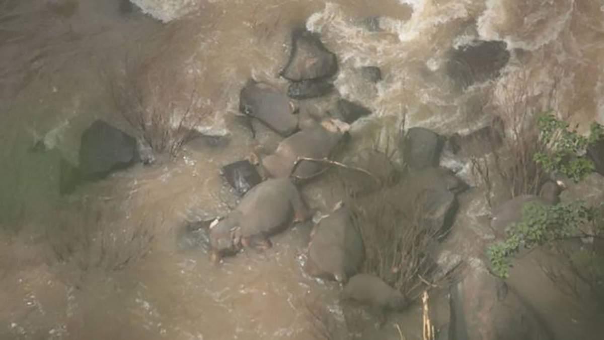 Шість слонів загинули у водоспаді