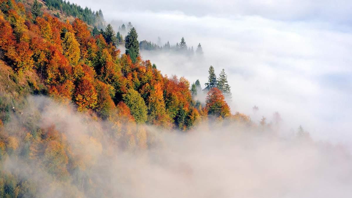 Україну 28 січня накриє туман