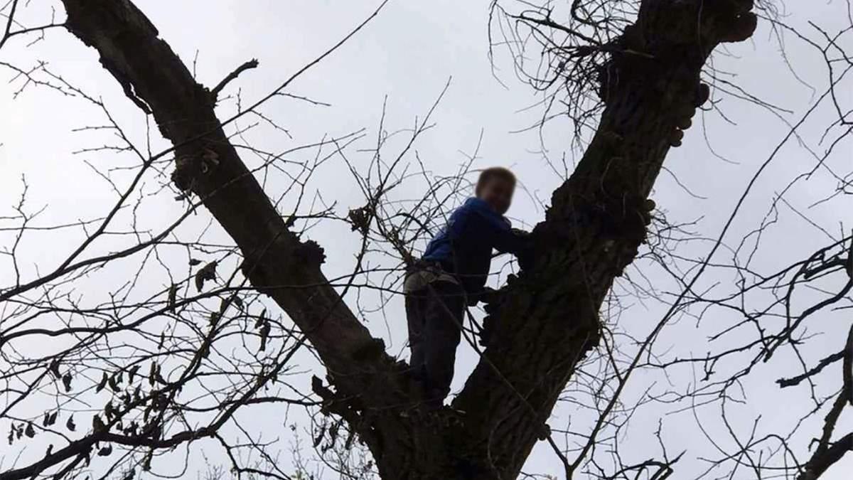 Под Днепром спасатели снимали с высокого дерева мальчика, который полез туда за грибами