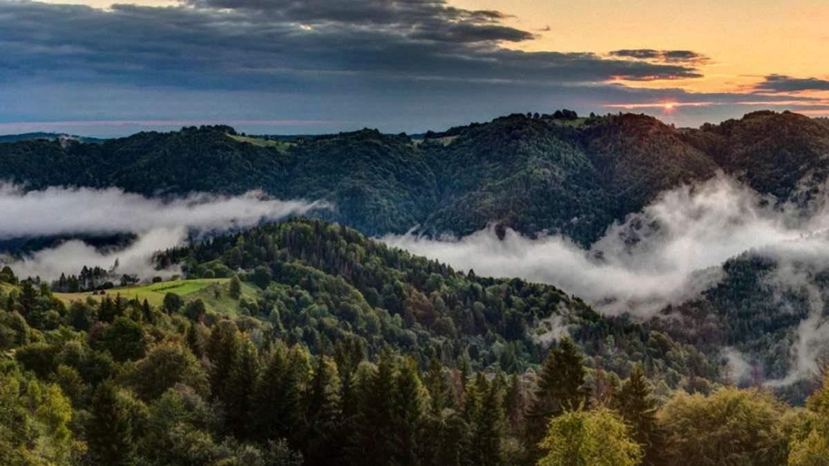 Карпатские леса