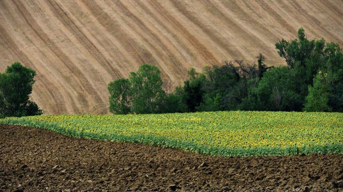 Земельна реформа в Україні: експерти попередили про ризики та можливості