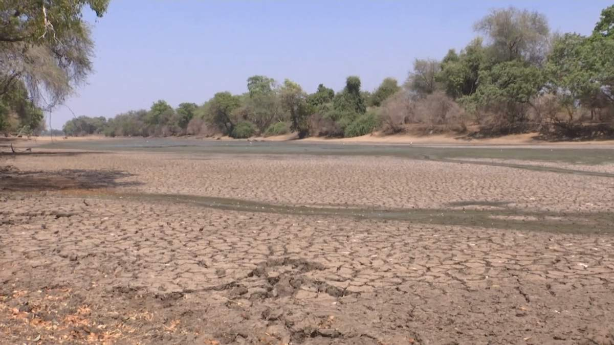 Найжорсткіша посуха в історії: у Південній Африці загинули понад 100 слонів