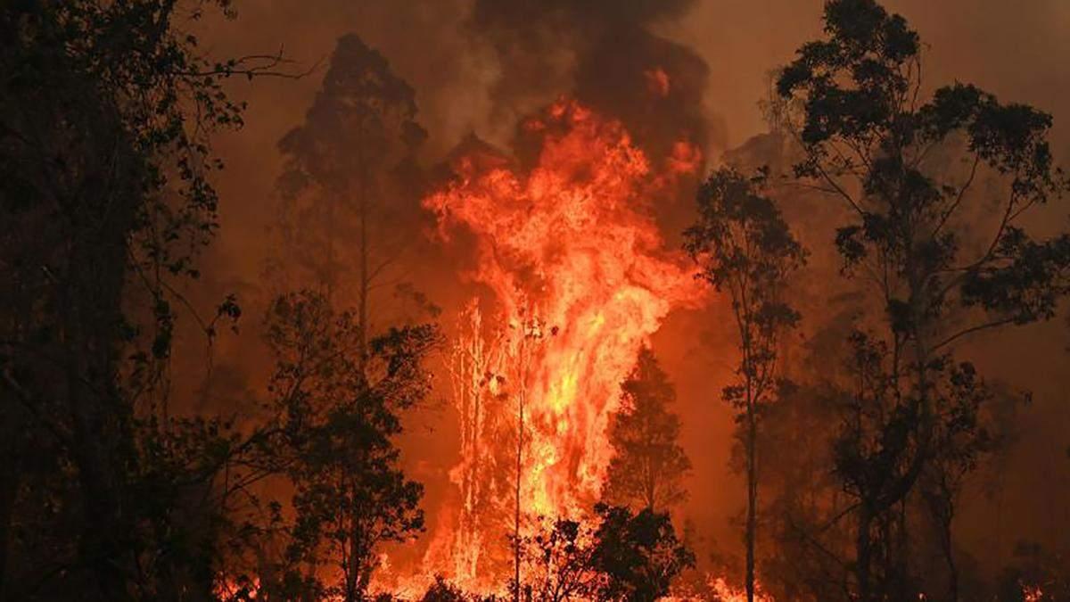 Лісові пожежі в Австралії 2019 - відо, фото пожежі - новини світу