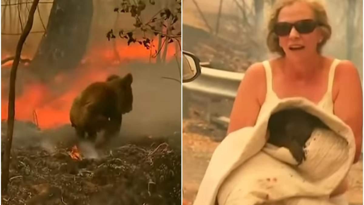 В Австралії жінка врятувала коалу, що опинилась у палаючому лісі