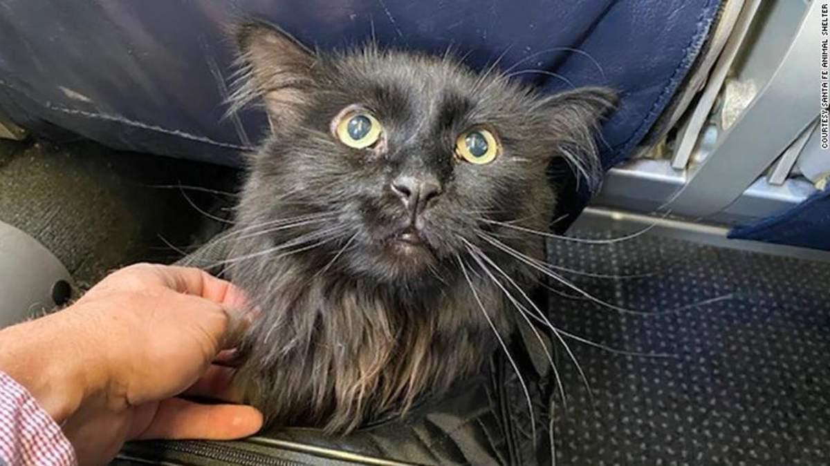 Кота, пропавшего 5 лет назад, нашли в 2 тысячах километров от дома