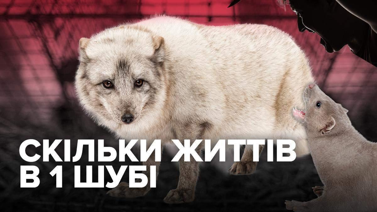 Сколько нужно убить животных на одну шубу