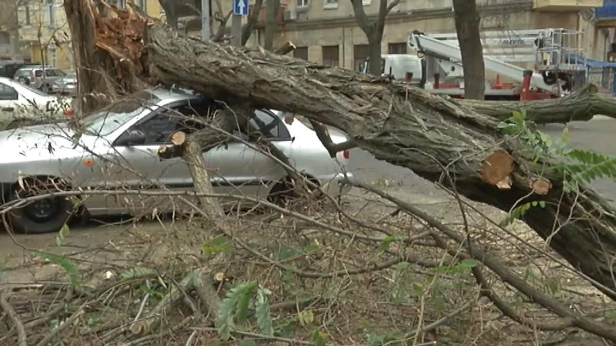 Вітер повалив дерева на припарковані авто в Одесі