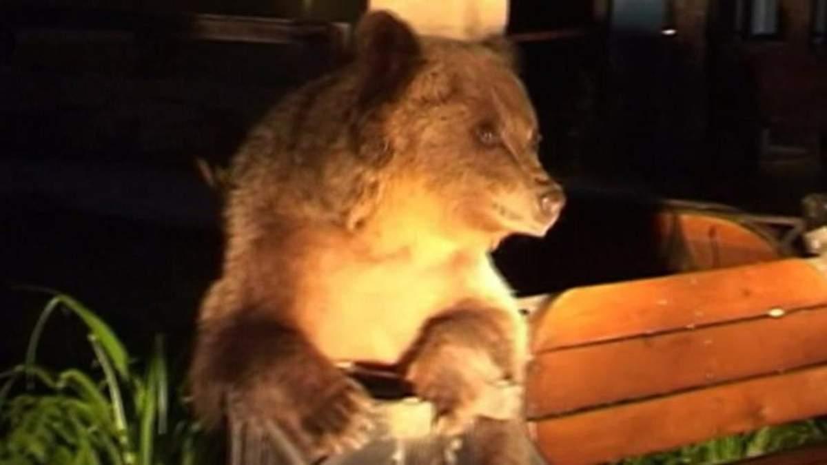 Медведь на улице в Румынии