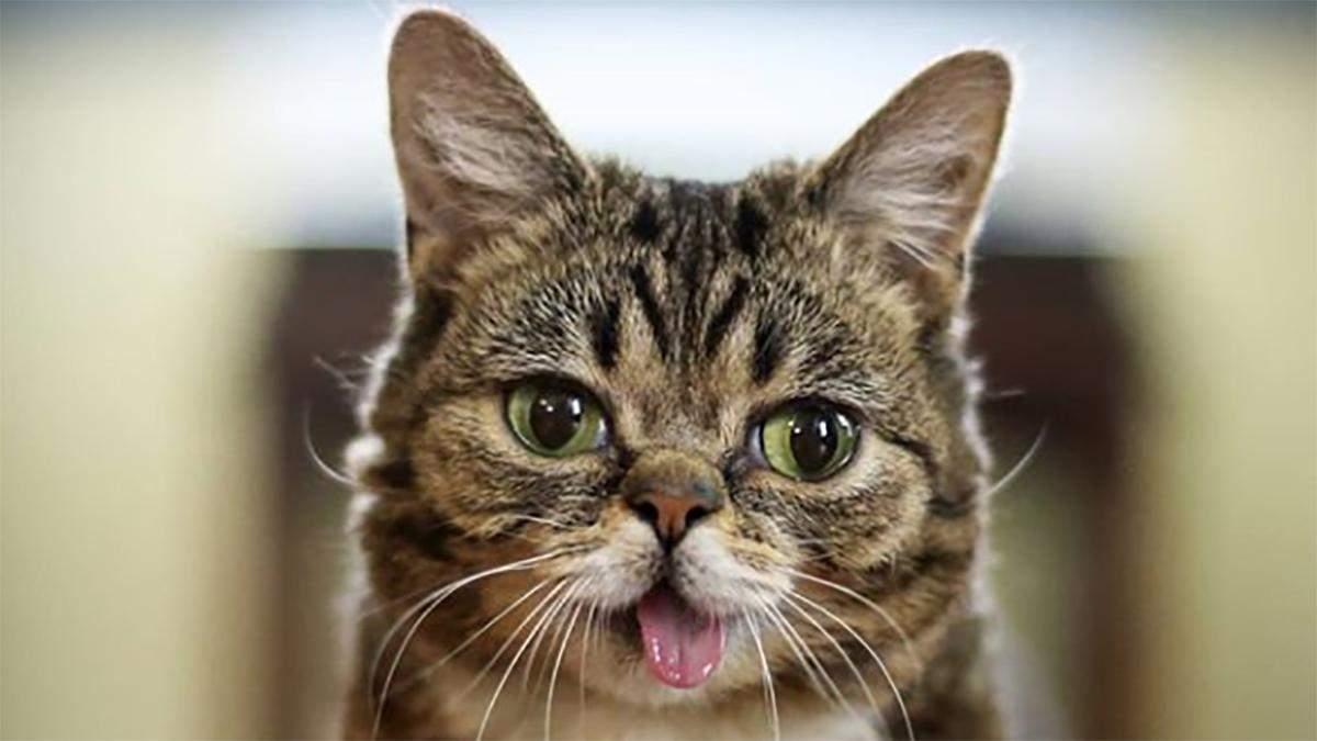 Помер кіт Lil Bub 01.12.2019: популярний кіт з інстаграму