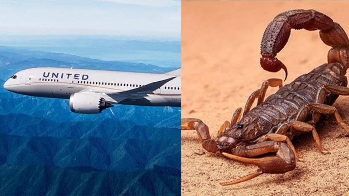 Пасажирку американського літака вкусив скорпіон: як він опинився на борту – загадка
