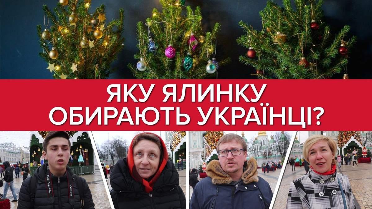 Опитування: Яку ялинку обирають українці