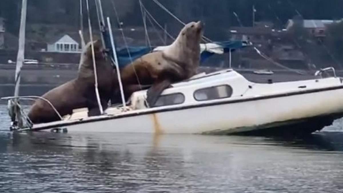 Морські леви на кораблику