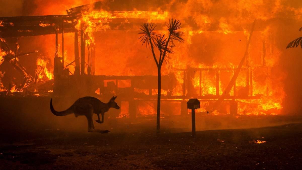 Австралія: говорять вже про мільярд загиблих тварин