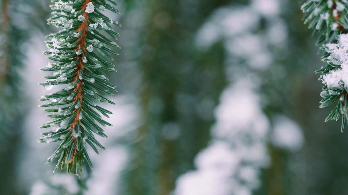 Погода 11 января 2020 Украина: какую погоду обещает синоптик
