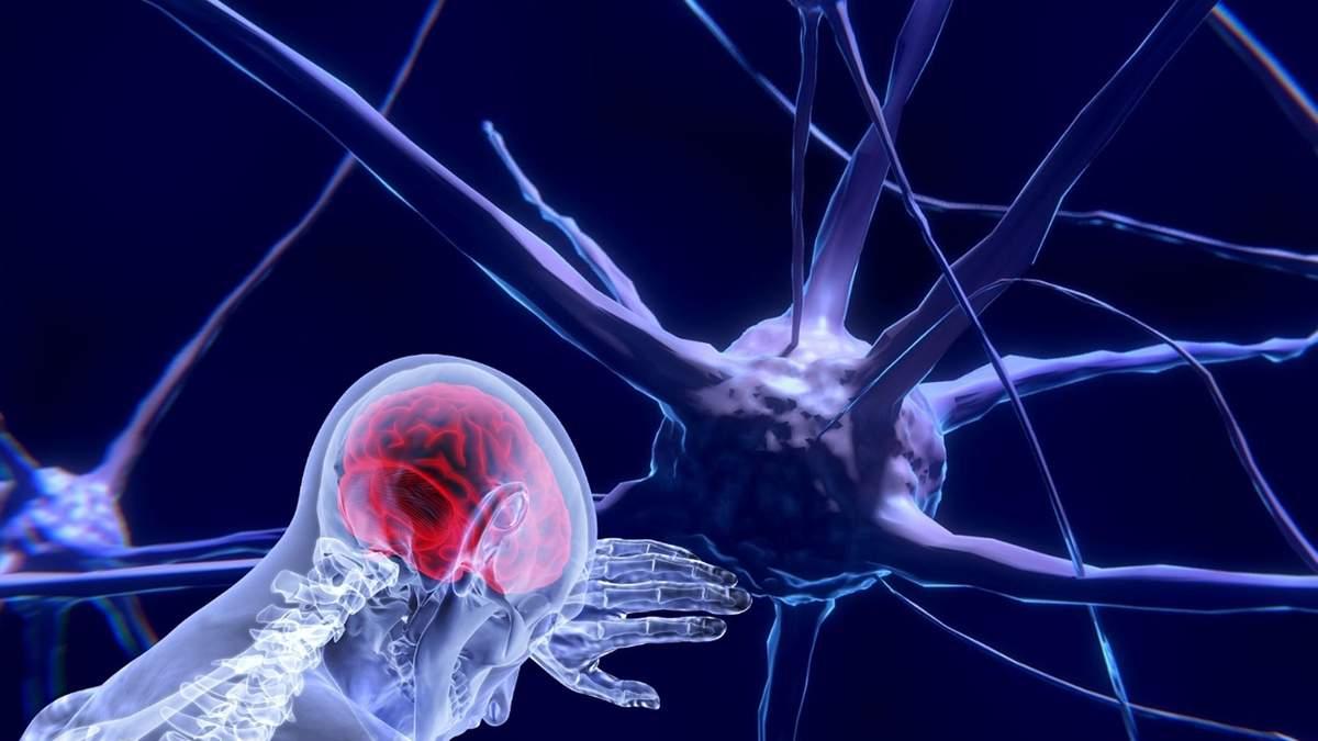 Роль нервової системи в імунних процесах
