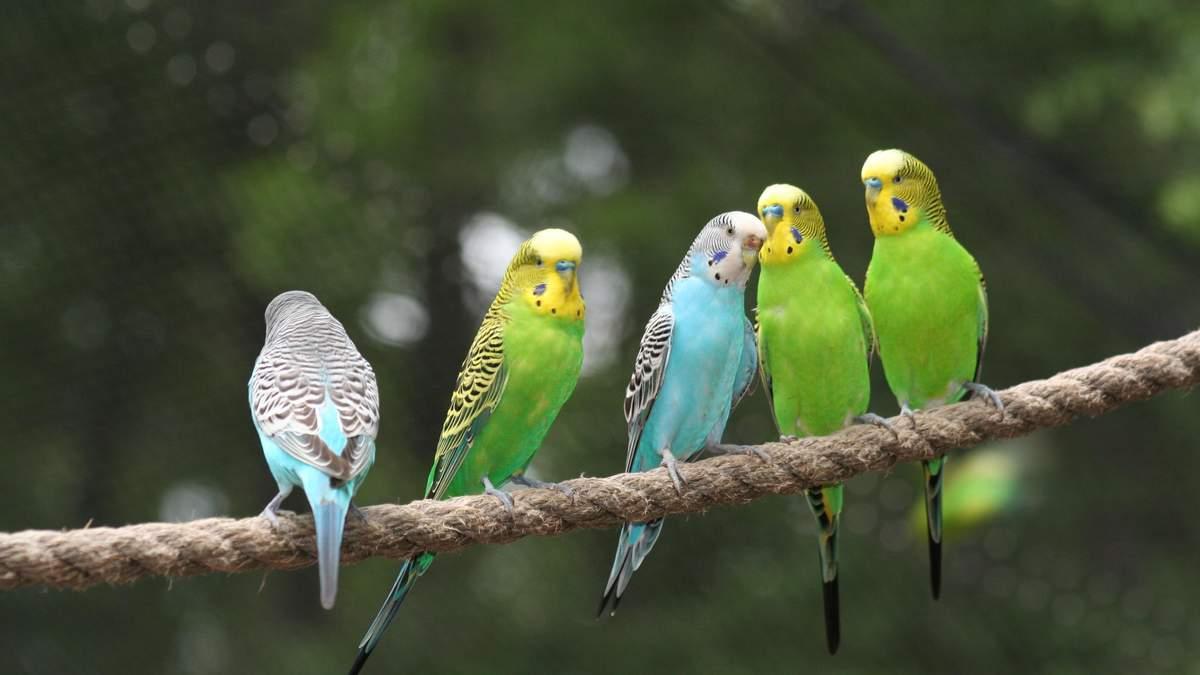 Півсотні папуг викинули у лісі під Харковом: шокуючі фото та відео