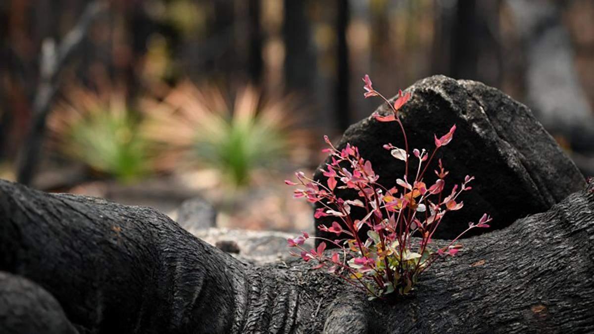 Дерева у національному парку пускають перші паростки