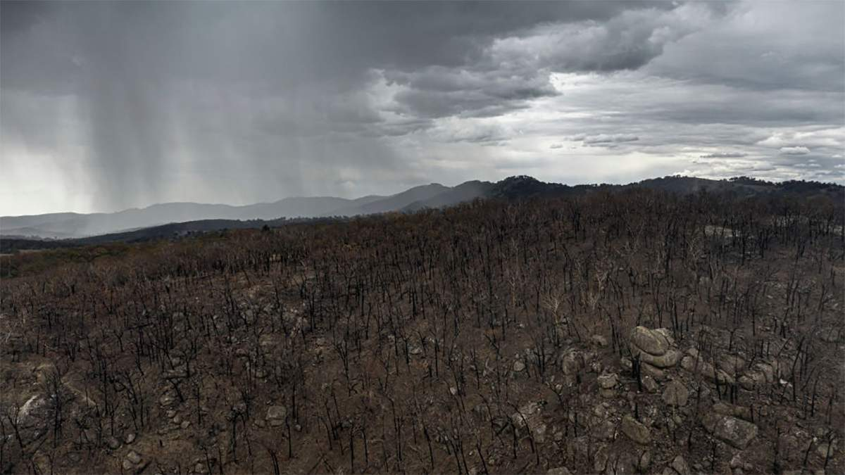 Пожежі в Австралії 2020: в Австралії випав дощ – фото, відео
