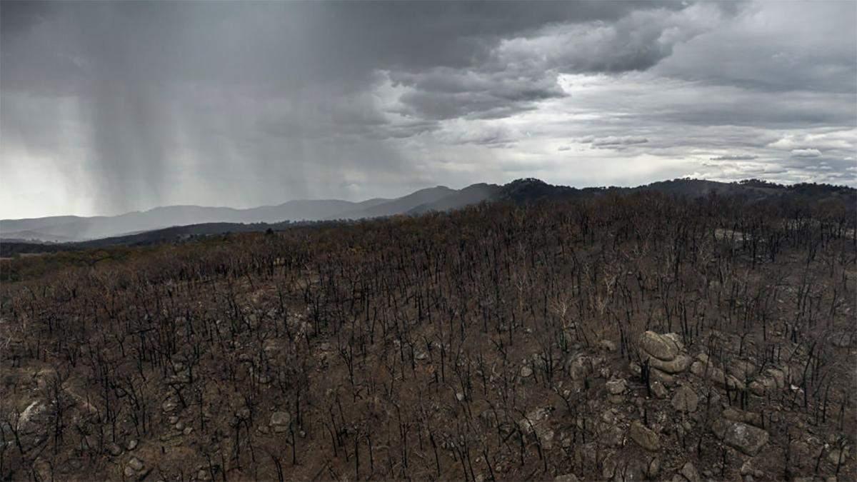 Пожар в Австралии 2020: в Австралии выпал дождь – фото, видео