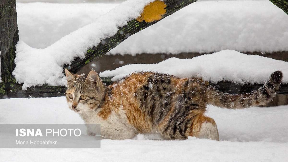 Снег в Иране
