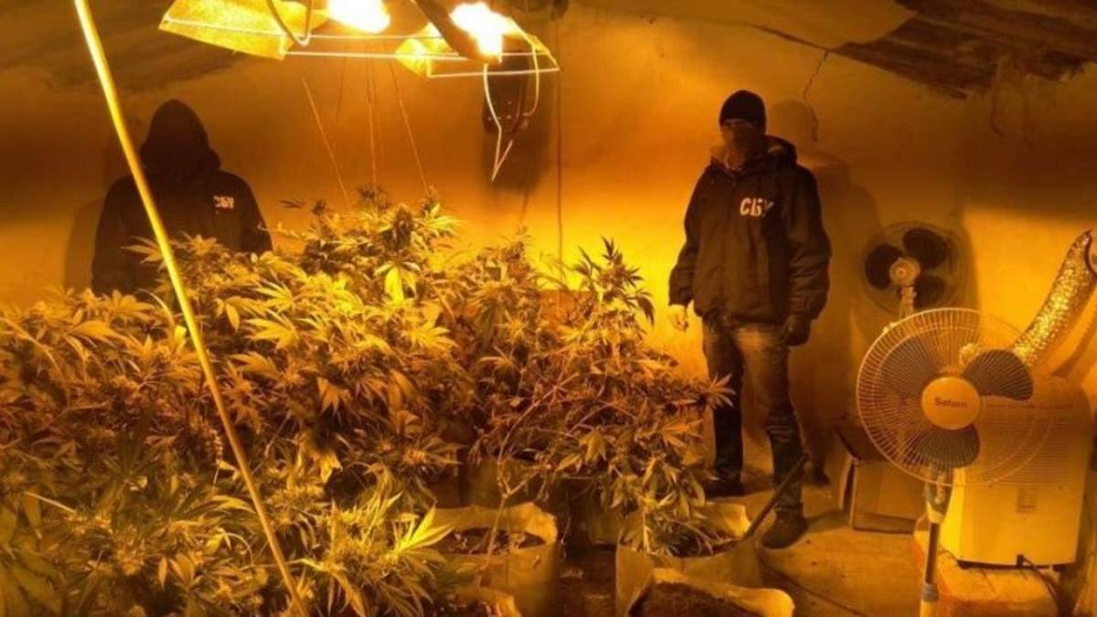 """СБУ затримала одеських """"садоводів"""", які вирощували в теплицях коноплю"""