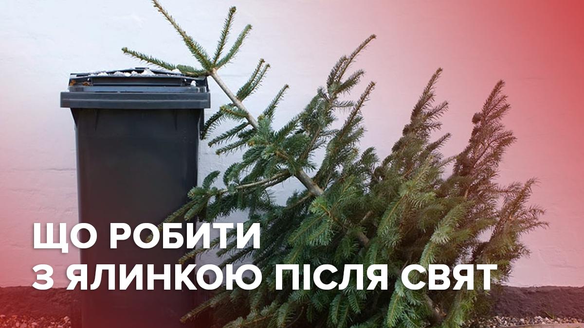 Елки опасно выбрасывать в мусорник: что делать с деревом после праздников