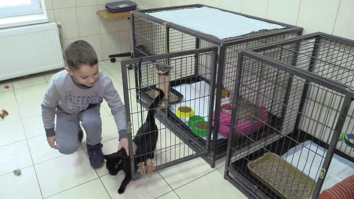 Кототерапия в Черкассах: ветклиника приглашает пообнимать животных