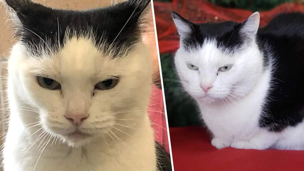 """""""Худшая кошка в мире"""" ищет дом: американский приют разместил забавное объявление"""