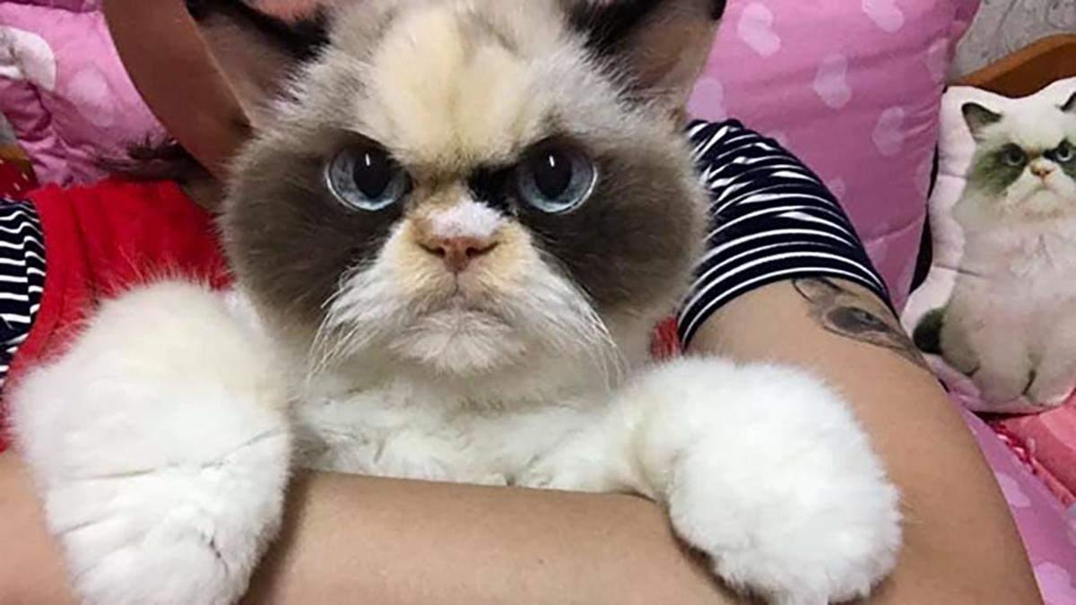 Кішка Мяу-Мяу, яка схожа на Grumpy Cat: фото кішки з інстаграму