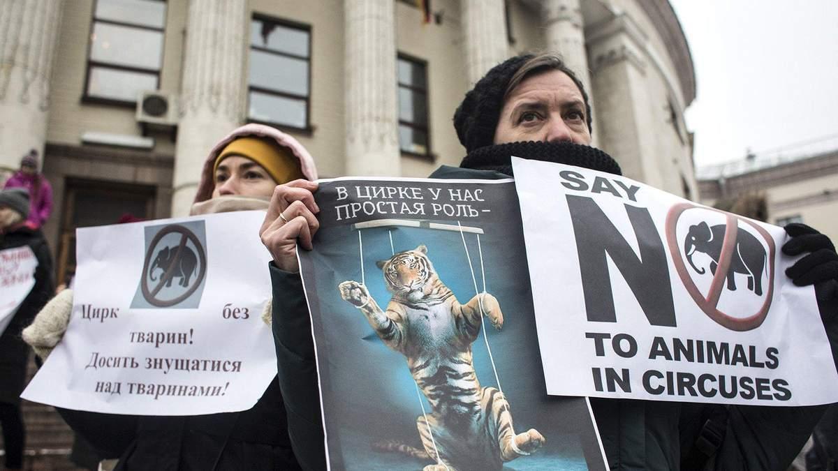 Протест против животных в цирках
