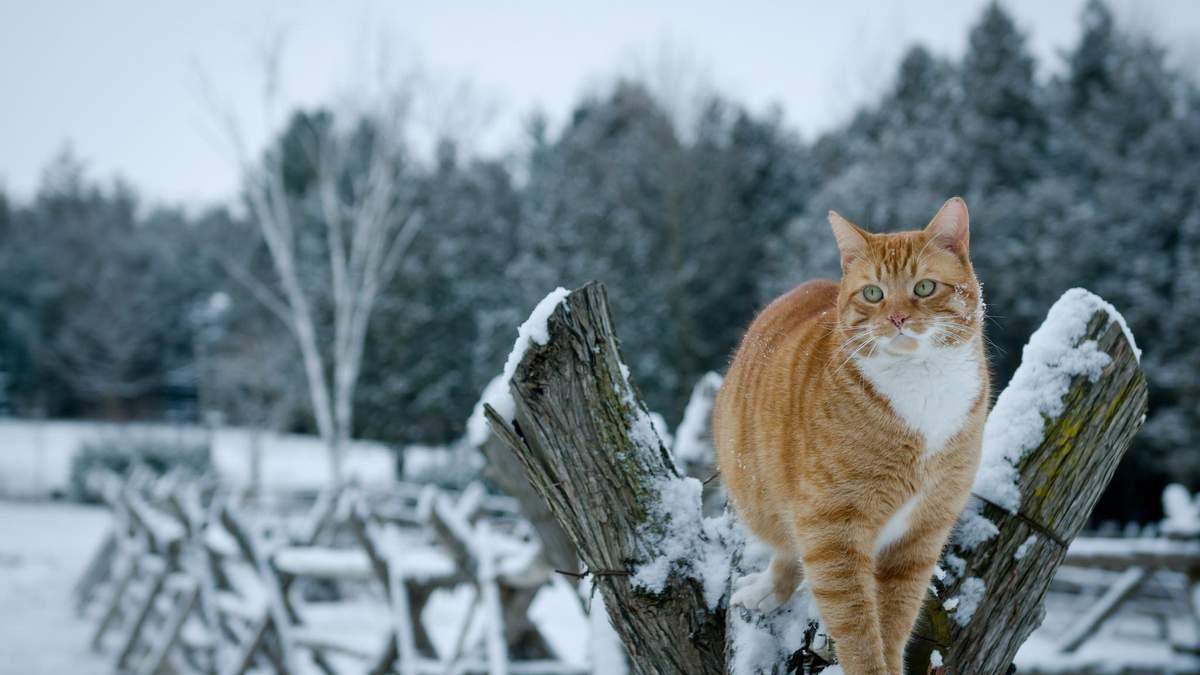 Погода 31 січня 2020 Україна: яку погоду обіцяє синоптик