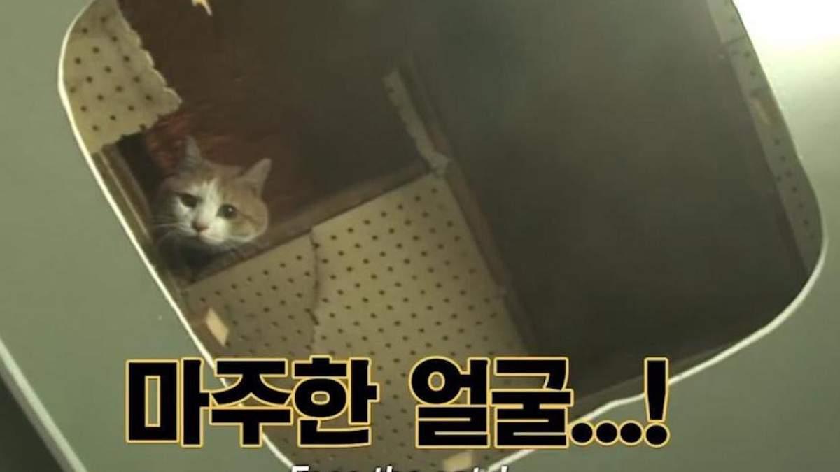 Врятований котик