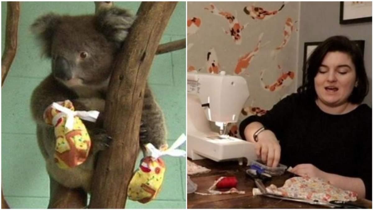 Австралийским коалам со всего мира присылают перчатки